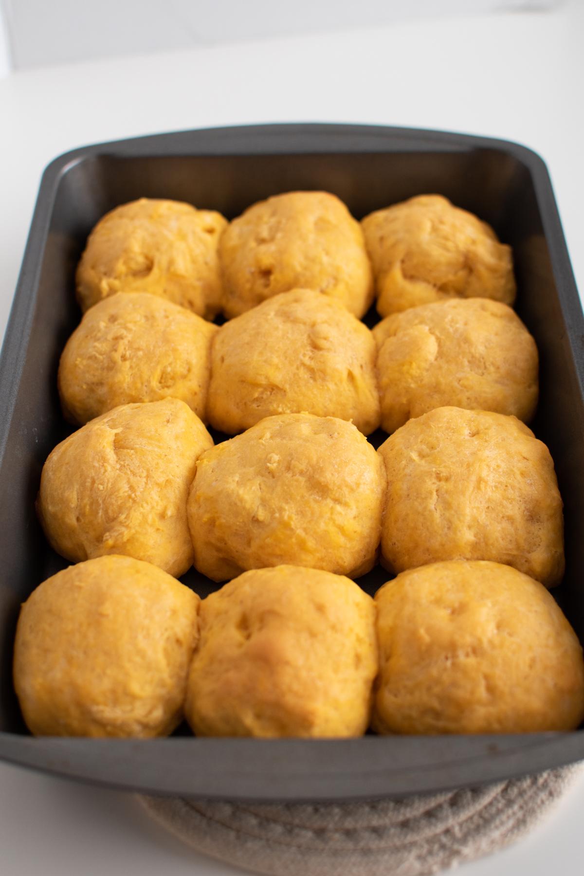 12 cooked pumpkin yeast rolls in a metal cake pan.