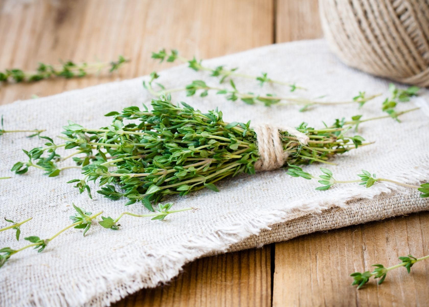 Bundle of thyme in twine and lose stems on burlap fabric.