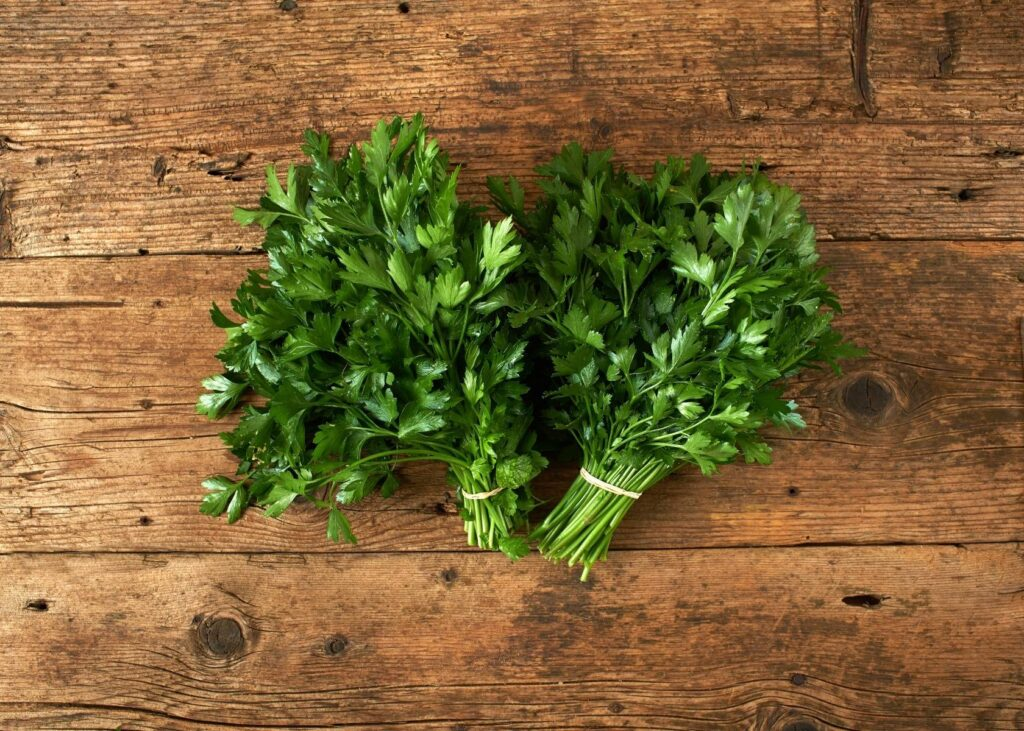 Two bundles of parsley on rustic wooden table.