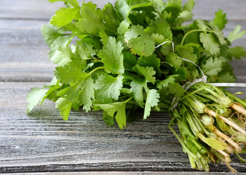 Bundle of cilantro leaves on wooden table.