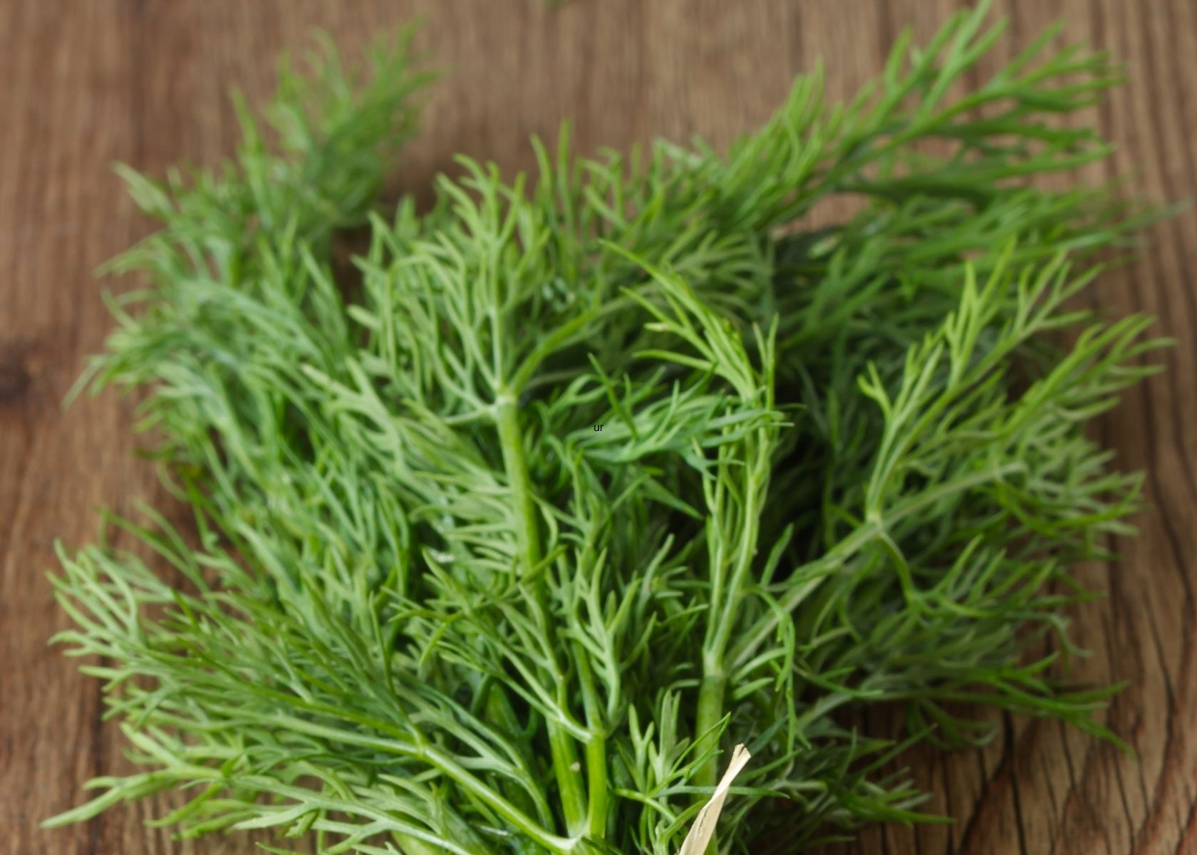 Fresh dill fronds on wooden table.