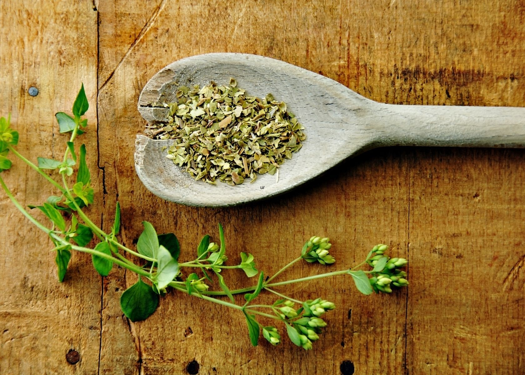 Dried oregano in wooden spoon next to fresh leaves.