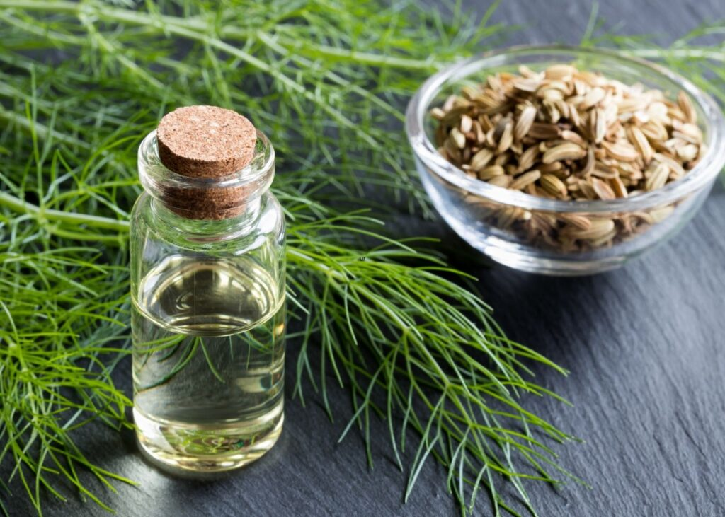 Fennel fronds next to bottle of fennel oil and bowl of seeds.