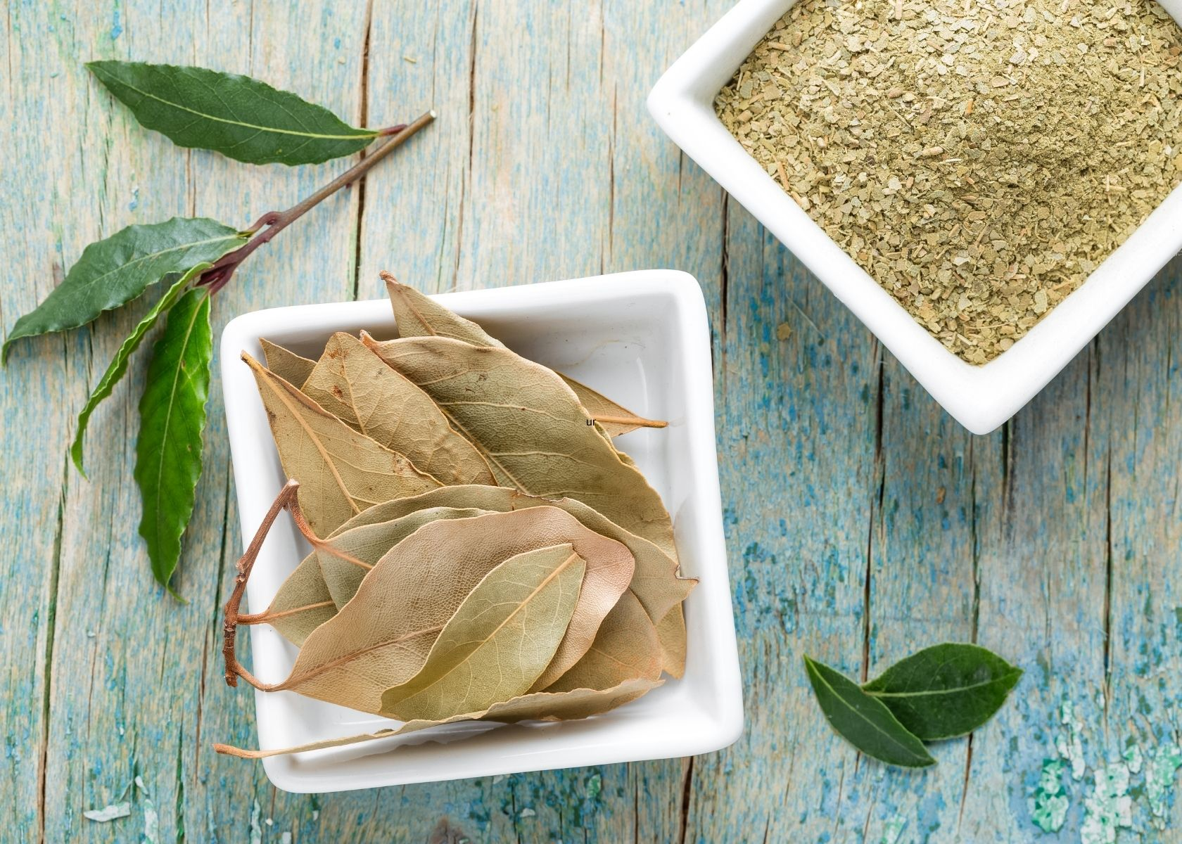 Fresh, dried and crushed bay leaf in white dishes on blue wooden table.