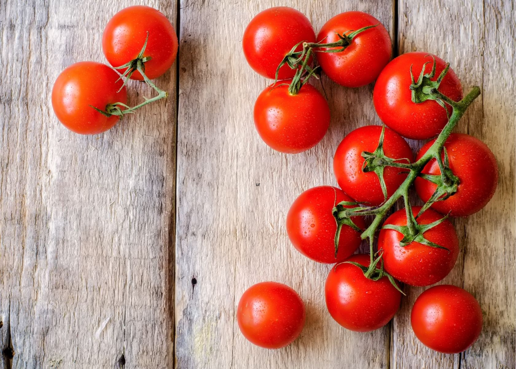 Several plump, fresh red tomatoes on the vine over rustic wooden table.