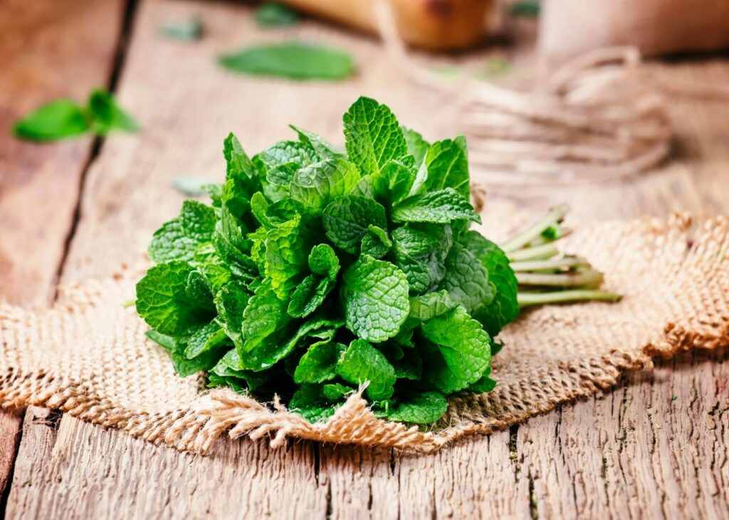 Bundle of mint leaves on scrap of burlap on wooden table.