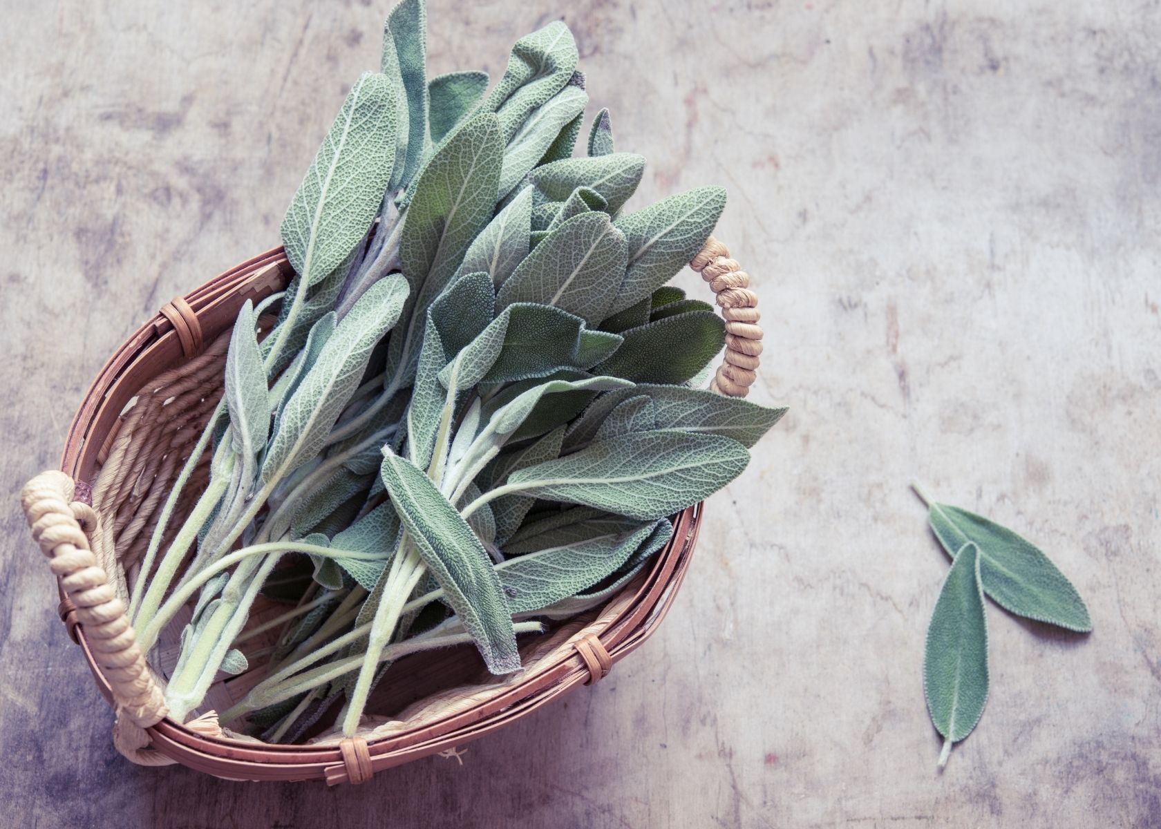 Leaves of fresh sage in rustic bowl on gray patterned table.