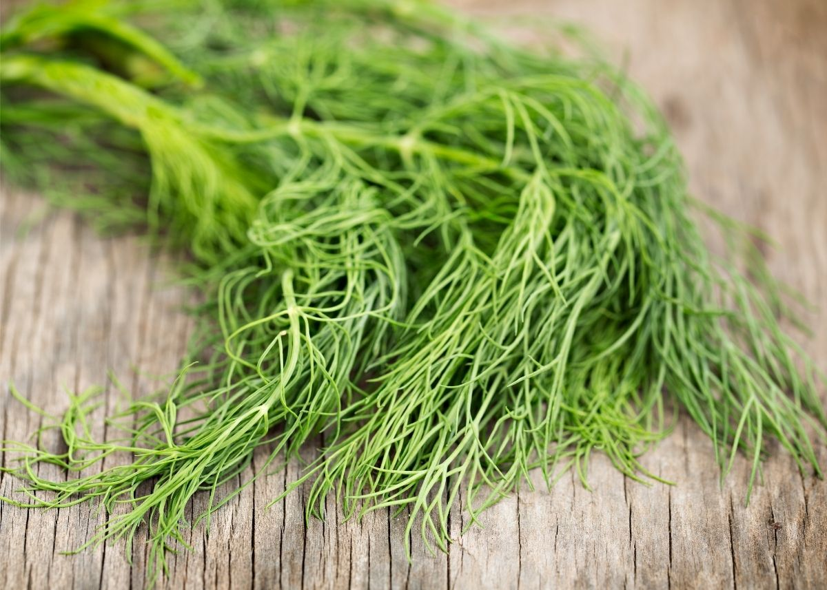 Bright green dill weed bundle piled on top of a wooden cutting board.