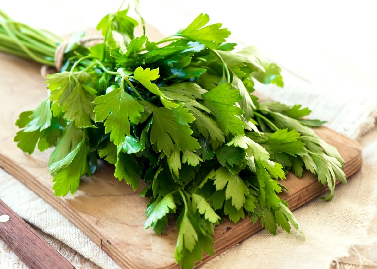 Large bundle of flat leaf parsley tied with kitchen twine on wooden cutting board.
